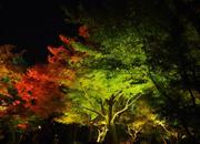 Kyoto I Koyo Light Upの様子