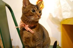 Yuri cat